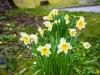 Frühling ist in der Nähe...
