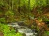Wasser schlängelt sich durch den Wald